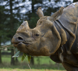 Photos From Rhino 'Hugo'