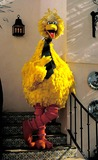 Big Bird Photo 2