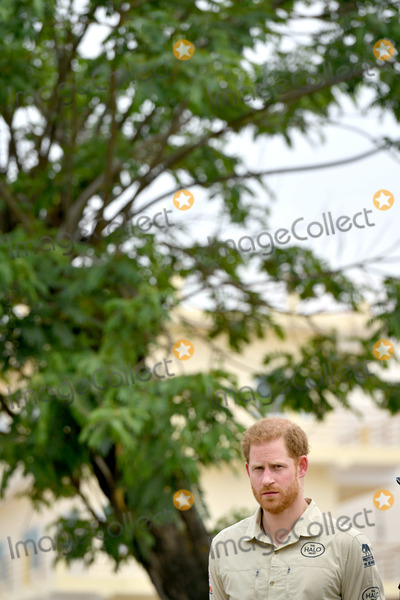 Wale Photo - 27092019 - Prince Harry Duke of Sussex in front of the Diana Tree in Huambo Angola on day five of the royal tour of Africa The Duke is visiting the minefield where his late mother Diana Princess of Wales was photographed in 1997 which is now a busy street with schools shops and houses Photo Credit ALPRAdMedia