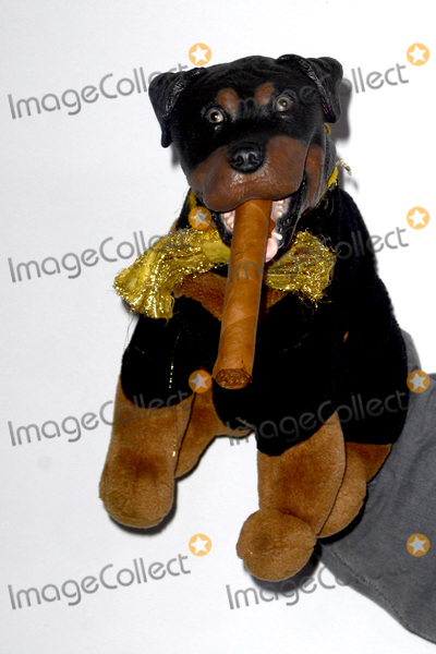 Triumph The Insult Comic Dog Photo - LOS ANGELES - AUG 5  Triumph the Insult Comic Dog at the HULU TCA Summer 2016 Press Tour at the Beverly Hilton Hotel on August 5 2016 in Beverly Hills CA