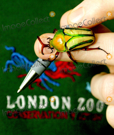 The Animals Photo - Paul Pearce-kelly (Curator of Invertebrates) Takes Stock of African Flower Beetles -Annual Stocktake of the Animals -London Zoo Regents Park London 01062004 Joy MerryweatherglobelinkukGlobe Photosinc