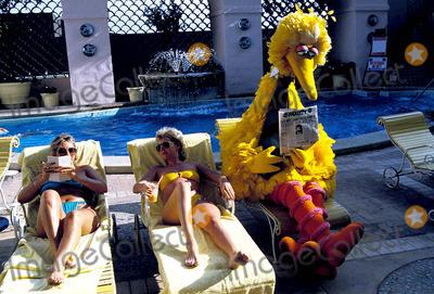 Big Bird Photo - Big Bird Goes Hollywood at the Pool of the Wilshire Hotel Photo Jeff Slocomb  Globe Photos Inc 1985 1970sretro