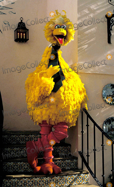 Big Bird Photo - Big Bird Goes Hollywood Photo Jeff Slocomb  Globe Photos Inc 1985 1970sretro