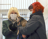 Photo - Camilla Duchess of Cornwall Visits Battersea Dogs and Cats Home