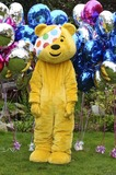 Pudsey Bear Photo 2